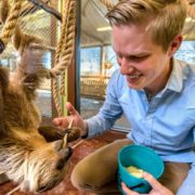 Sloth Feedings
