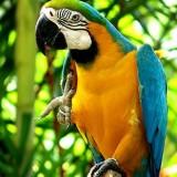 Exotic Birds & Parrots