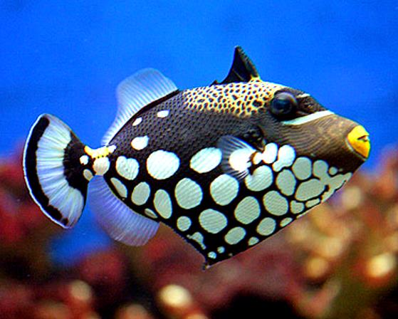 Branson 39 s wild world aquarium branson mo the travel for Fish s wild