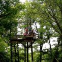 Treetop Platform