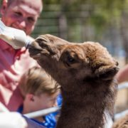 Exotic Animal Bottle Feedings!