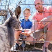 Kangaroos & More!