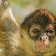 LIVE Monkeys!