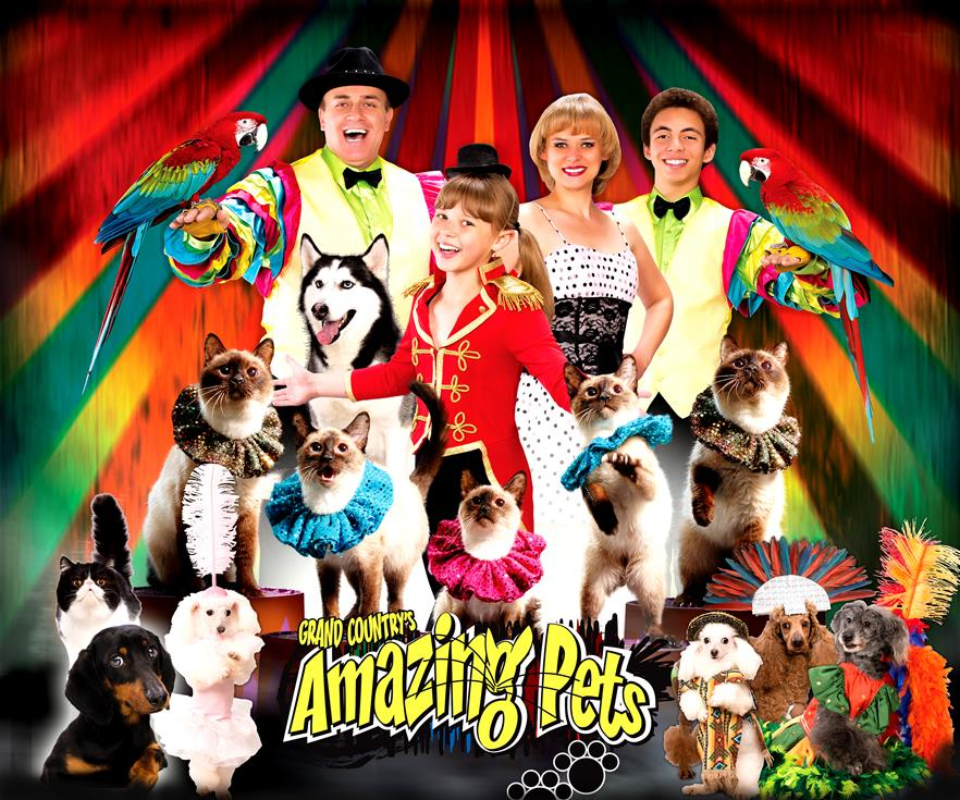 Amazing Pets Show Packages