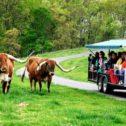 Wildlife Tram Tour