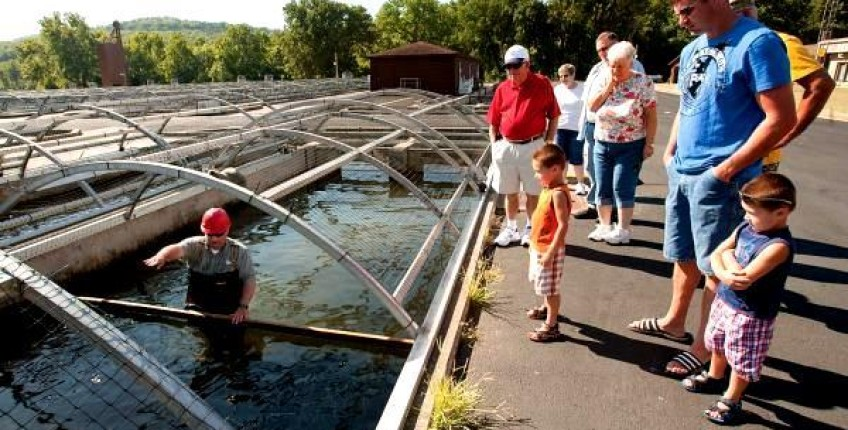 Shepherd of the hills fish hatchery branson mo the for Branson fish hatchery