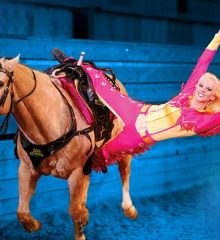 Dixie Stampede Packages