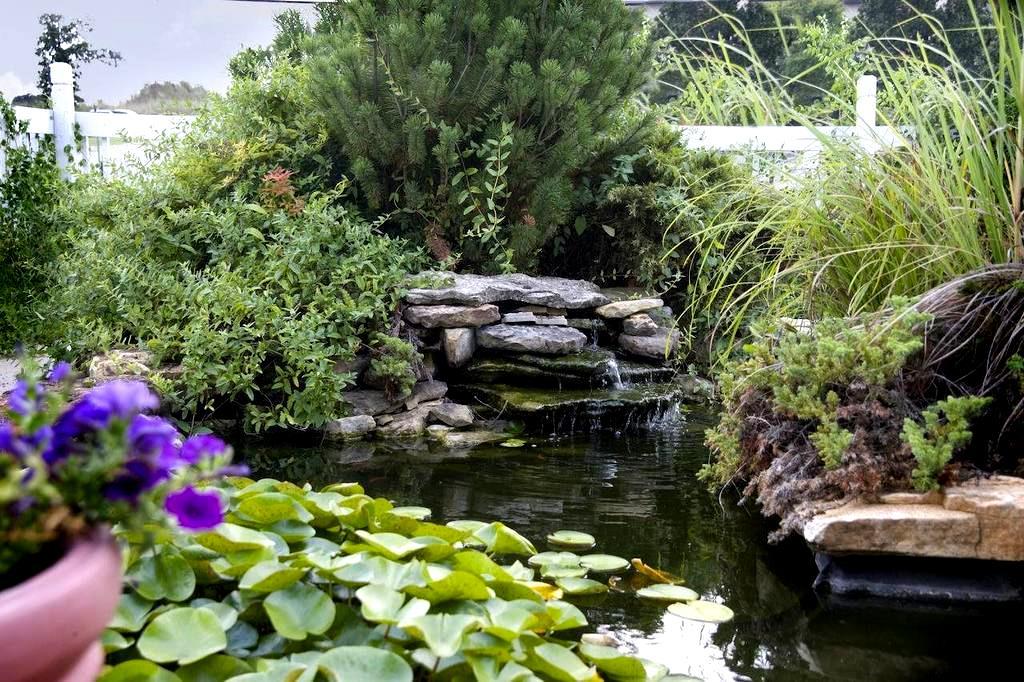 Landscaping With Honeysuckle : Honeysuckle inn branson mo  the travel office