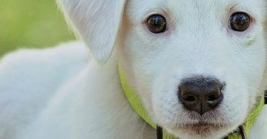 Branson Pet-Friendly Condos