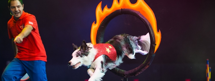 See Chris Perondi's incredible Stunt Dog Experience show throughout the summer season!