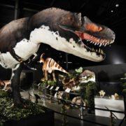 An Incredible Prehistoric Exhibit!